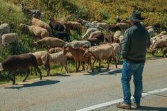 Shepherd with flock of goats grazing beside road. Serra da Estrela, Portugal, July 14, 2018. Shepherd with flock of goats grazing beside road, at the Serra da stock image