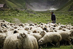 Shepherd and flock of sheep Stock Photo