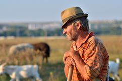 Shepherd with goat and sheep Royalty Free Stock Photography