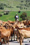 Shepherd and goats, Alora, Spain. Royalty Free Stock Image
