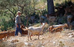 Shepherd with goats in mountains, Andalusia. Stock Images