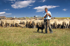 Shepherd with grazing sheep. Shepherd with his dog and grazing sheep leaning on his stick stock images