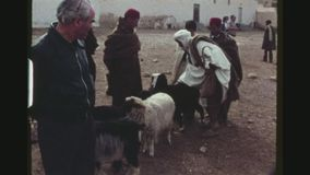 Shepherd a Guiding His Sheep en pueblo almacen de metraje de vídeo