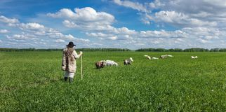 Shepherd and herd of goats on a pasture Royalty Free Stock Image