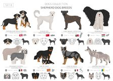 Shepherd and herding dogs collection isolated on white. Flat style. Different color and country of origin. Vector illustration royalty free illustration