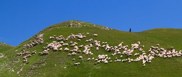 Shepherd and his flock Royalty Free Stock Images