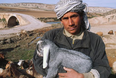 Shepherd holding goat kid, Syria. A young man holds a near a Roman bridge across the Afrin River in northern Syria stock photography