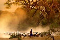 Shepherd leading a flock of goats. Amboseli Kenya stock image