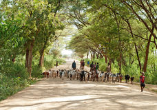 Shepherd leading a flock of goats in North Kenya Royalty Free Stock Images
