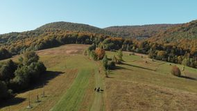 Shepherd leads cows in the Carpathian Mountains. Ukraine. Aerial view of the carpathian mountains in autumn. Small village stock footage