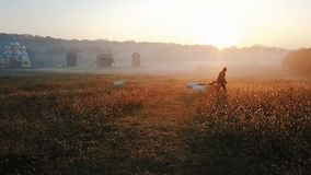 A shepherd leads a herd of goats to pasture. Early morning, golden sunlight. In the background is a field and mills. Morning in the Ukrainian village. Golden stock footage