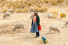 Shepherd managing her flock, Peru Royalty Free Stock Photos
