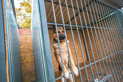 Shepherd military dog in the pound Stock Images