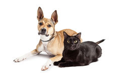 Shepherd Mix Dog and Black Cat Laying Together Stock Image