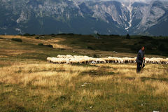 Shepherd in Molveno Royalty Free Stock Photography