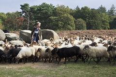 Shepherd near the dolmens of havelte, Holland Stock Images