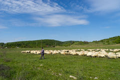 Shepherd near Sibiu Romania Stock Photo