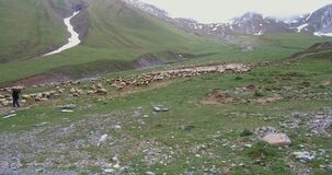 Shepherd poses a flock of sheep in the mountains