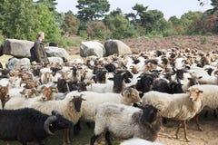 Shepherd près du dolmen de Havelte, Hollande Images stock