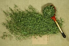 Shepherd purse. Dry herb for use in alternative medicine, phytot royalty free stock photography