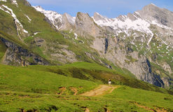 Shepherd, Pyrenean mountains, France Royalty Free Stock Photos