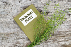 Shepherd's purse (Capsella bursa-pastoris) and directory medicin. Medicinal plant shepherd's purse (Capsella bursa-pastoris) and herbalist handbook on old wooden Royalty Free Stock Image