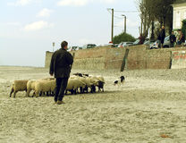 Shepherd of the Sands. Sheep dog and shepherd make an good team Stock Photography