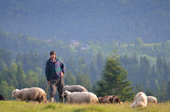 Shepherd Royalty Free Stock Photos