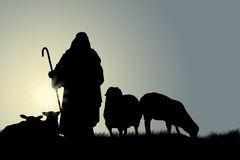 Shepherd With Sheep. In The Fields Stock Photos