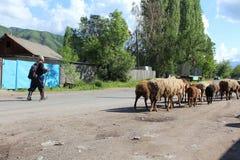 Shepherd and Sheep Stock Photo