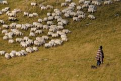 The shepherd and sheep Royalty Free Stock Photography