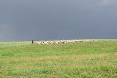 Shepherd with sheep. Flock graze on the hill. Green Hill. Summer season. royalty free stock images