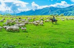 The shepherd and sheep Stock Photo
