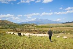 shepherd stada zdjęcia royalty free