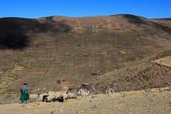 Shepherd sur l'île du soleil, lac Titicaca, Bolivie Image libre de droits