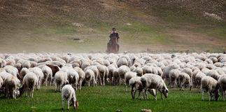 A shepherd Royalty Free Stock Photography