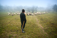 Shepherd watching over sheep Royalty Free Stock Photos