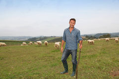 Shepherd at work in field Royalty Free Stock Images