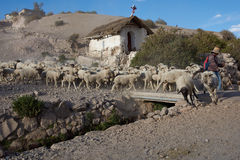 Shepherd at Work. A shepherd with a flock of sheep crossing a bridge over a stream in the small town of Putre in northern Chile Royalty Free Stock Images
