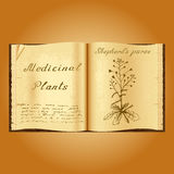 Shepherd's purse. Botanical illustration. Medical plants. Book herbalist. Old open book Royalty Free Stock Image