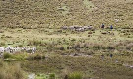 Shepherdess and daughter with sheep in Andes Peru lagoon royalty free stock photos