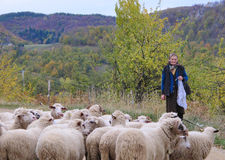 Shepherdess knitting with sheep Royalty Free Stock Image