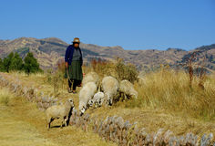 Shepherdess, Peru Royalty Free Stock Images