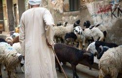 Shepherding in Kaïro, Egypte Royalty-vrije Stock Foto