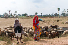 Shepherds along the road in the desert of Rajasthan. stock photo