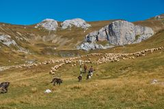 Mountain walk in Romania royalty free stock images