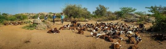 Shepherds and goat herd Stock Photos