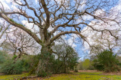 Shepherds Gutter. Tree in the new forest national park Royalty Free Stock Photos