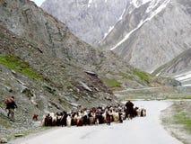 Shepherds herding Sheep in Himalayas Royalty Free Stock Photos