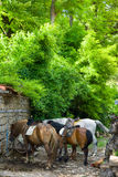Shepherds horses on watering in the Balkan village Stock Image
